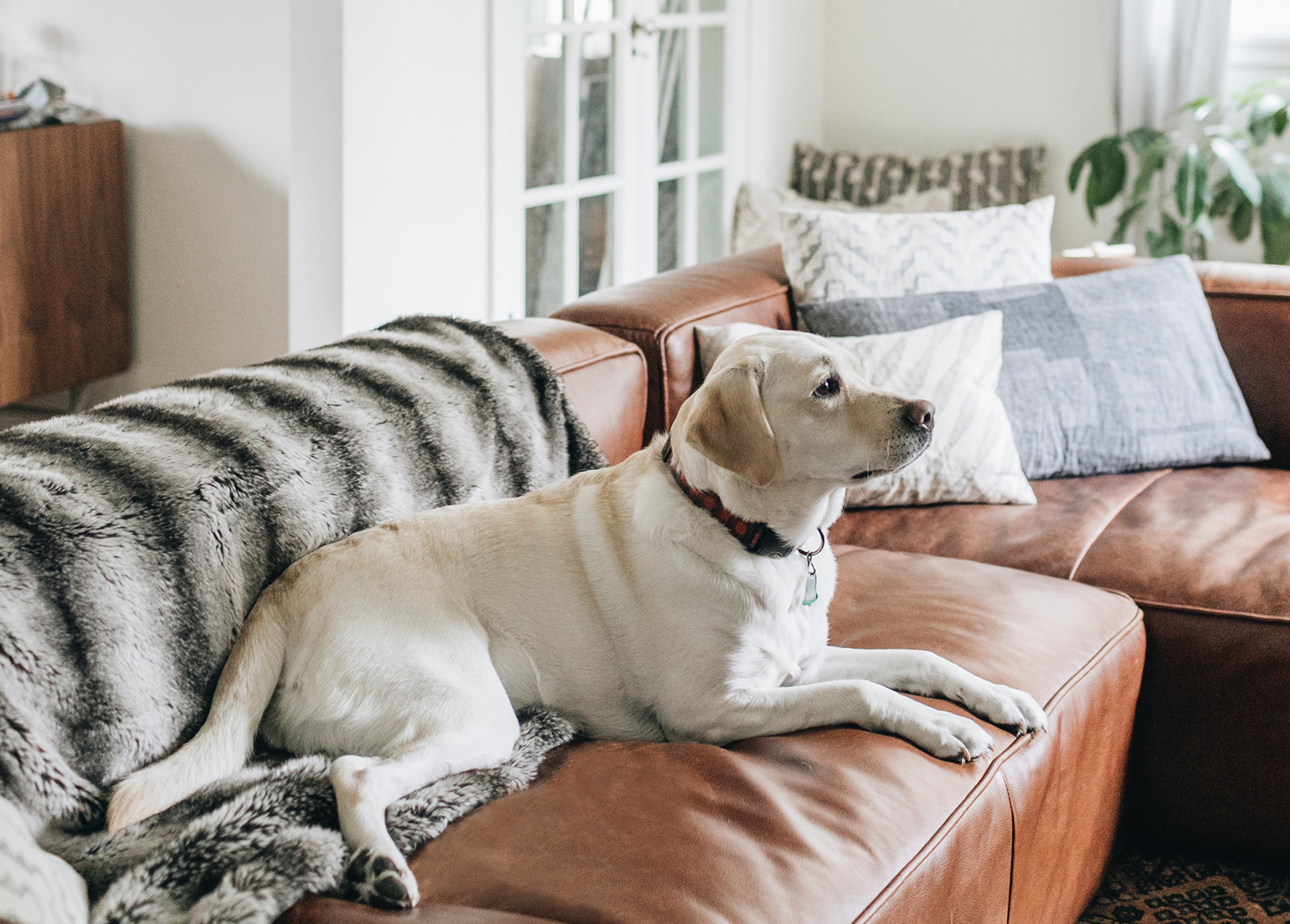 Leather Couch with Dogs: A Lament and a Cheat Sheet.