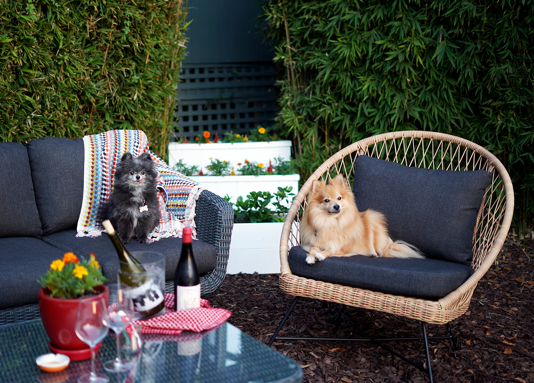 Marissa A. Ross' dogs lounge on their Article Aeri chair and Ora sofa.