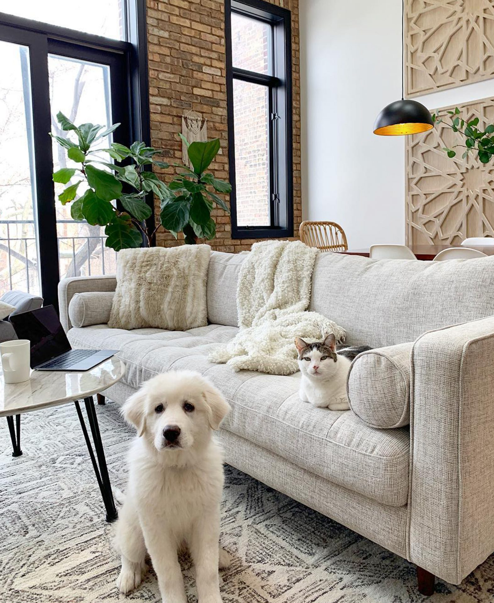 Michelle Sturgis' puppy and cat look innocent next to the Article Sven sofa in Birch Ivory