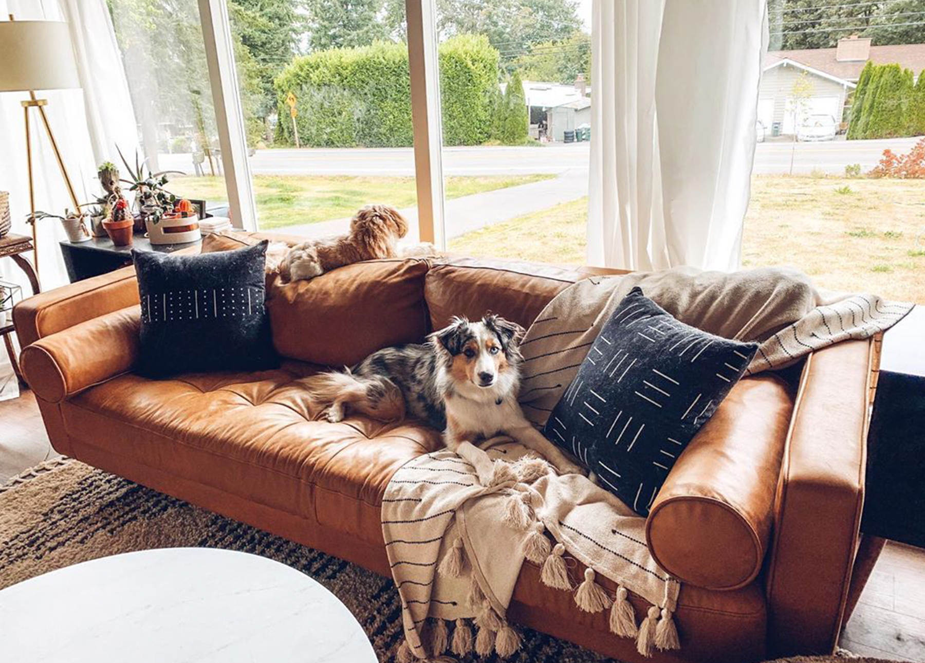 A tan leather sofa with lack pillows sits in a rancher-style hours. Two dogs are taking up the prime spots.