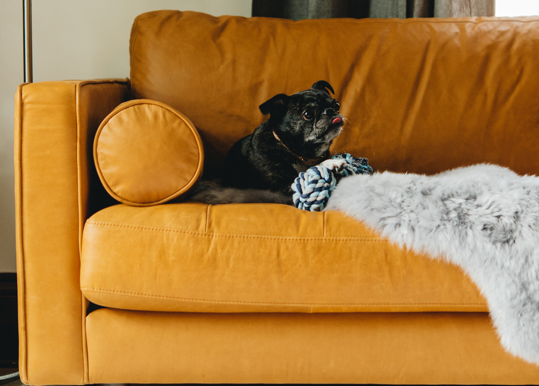 Dog Friendly Leather Couch